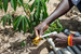Thumb_213_130123_uganda_pallisa_day3_199