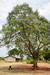 Thumb_360_130125_uganda_pallisa_day5_kachuru_class_166
