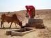 Thumb_rainwater_harvesting_beri_in_thar_desert_of_rajasthan