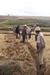 Thumb_digging_trench_by_community__antambolo